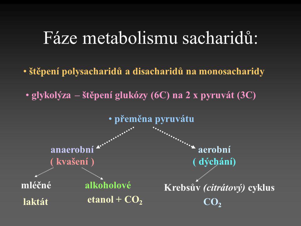 Fáze metabolismu sacharidů: • štěpení polysacharidů a disacharidů na monosacharidy • glykolýza – štěpení glukózy (6C) na 2 x pyruvát (3C) • přeměna py