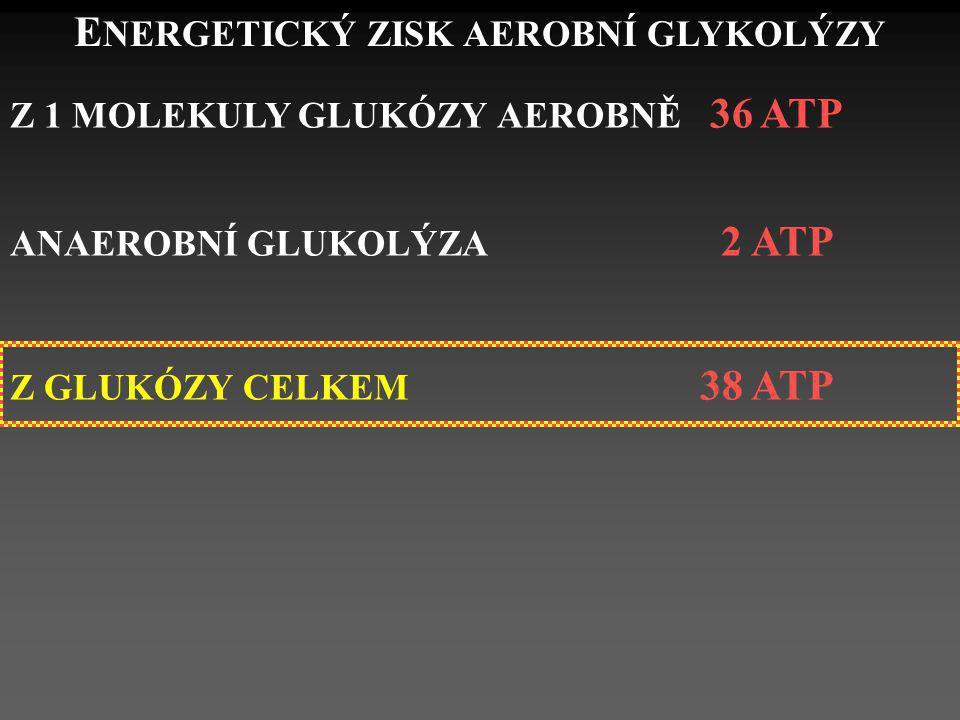 E NERGETICKÝ ZISK AEROBNÍ GLYKOLÝZY Z 1 MOLEKULY GLUKÓZY AEROBNĚ 36 ATP ANAEROBNÍ GLUKOLÝZA 2 ATP Z GLUKÓZY CELKEM 38 ATP