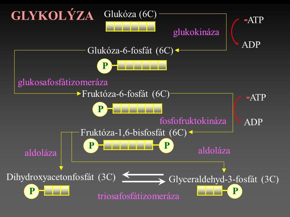 Fruktóza-6-fosfát (6C) Dihydroxyacetonfosfát (3C) Glukóza (6C) Glukóza-6-fosfát (6C) P P Fruktóza-1,6-bisfosfát (6C) P P - ATP ADP Glyceraldehyd-3-fos