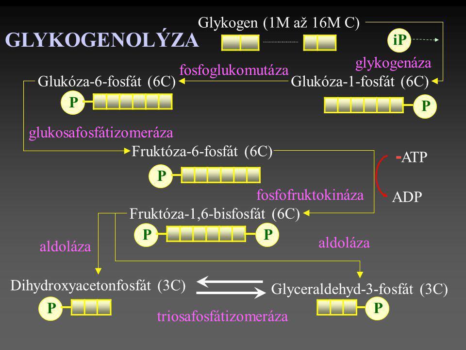Fruktóza-6-fosfát (6C) Dihydroxyacetonfosfát (3C) Glykogen (1M až 16M C) Glukóza-6-fosfát (6C).......................... P P Fruktóza-1,6-bisfosfát (6