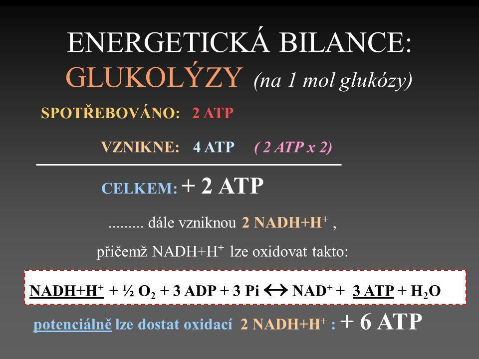 ENERGETICKÁ BILANCE: GLUKOLÝZY (na 1 mol glukózy) SPOTŘEBOVÁNO: 2 ATP VZNIKNE: 4 ATP ( 2 ATP x 2) CELKEM: + 2 ATP......... dále vzniknou 2 NADH+H +, p