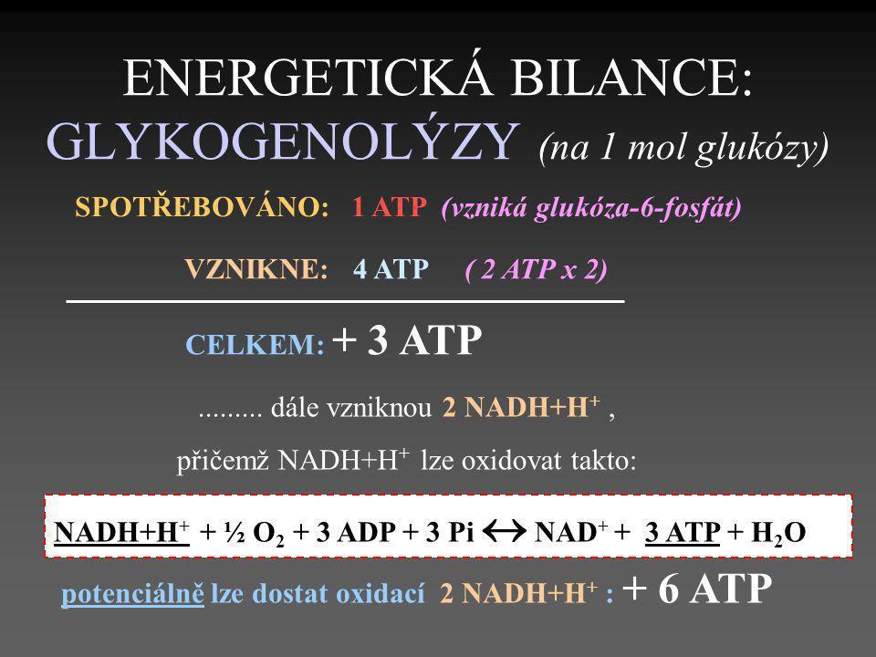 ENERGETICKÁ BILANCE: GLYKOGENOLÝZY (na 1 mol glukózy) SPOTŘEBOVÁNO: 1 ATP (vzniká glukóza-6-fosfát) VZNIKNE: 4 ATP ( 2 ATP x 2) CELKEM: + 3 ATP.......