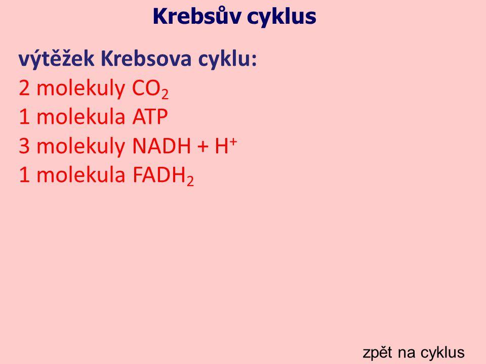Krebsův cyklus zpět na cyklus výtěžek Krebsova cyklu: 2 molekuly CO 2 1 molekula ATP 3 molekuly NADH + H + 1 molekula FADH 2