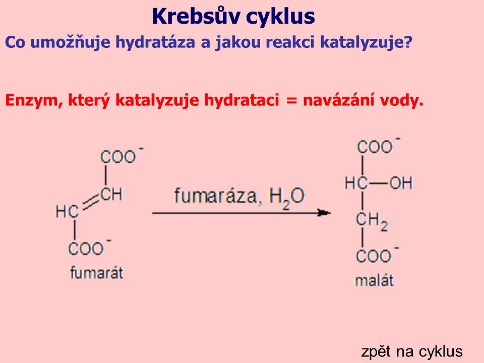 Krebsův cyklus zpět na cyklus Co umožňuje hydratáza a jakou reakci katalyzuje? Enzym, který katalyzuje hydrataci = navázání vody.