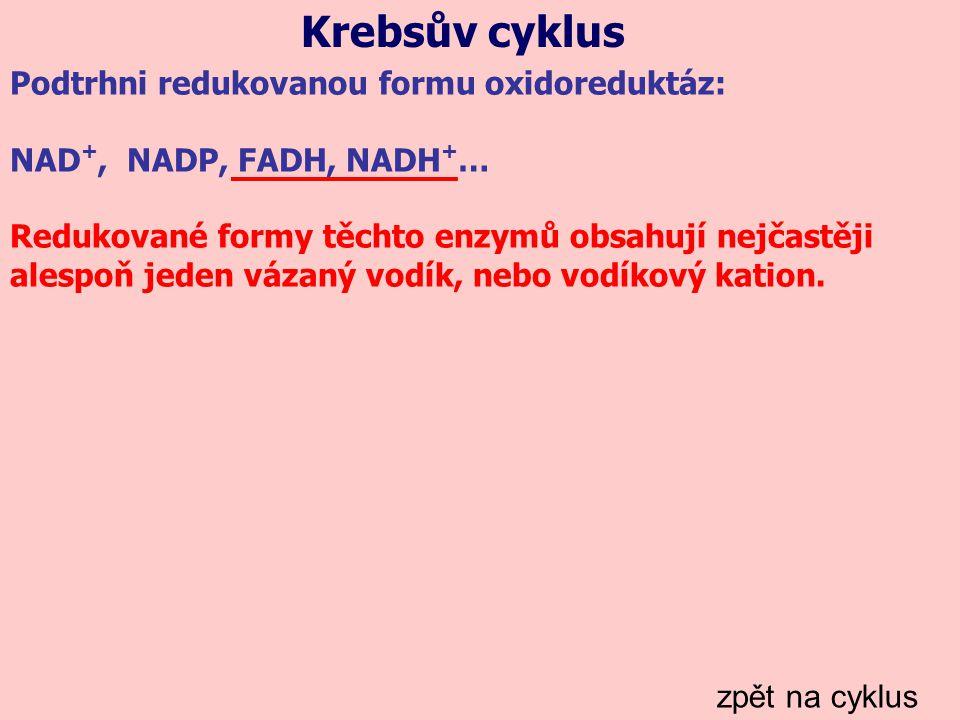 Krebsův cyklus zpět na cyklus Podtrhni redukovanou formu oxidoreduktáz: NAD +, NADP, FADH, NADH + … Redukované formy těchto enzymů obsahují nejčastěji