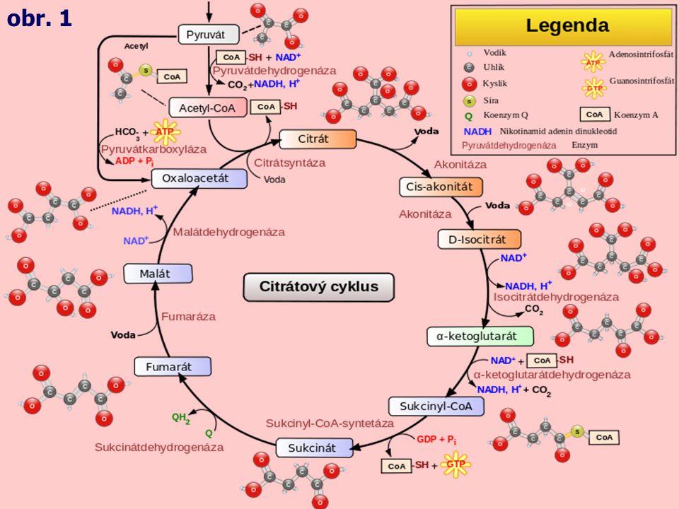 1.Acetylkoenzym A + oxalacetát acetyl-CoA + oxalacetát + H 2 O → citrát + HS-CoA •katalyzuje regulační enzym citrátsynthasa Krebsův cyklus zpět na cyklus obr.