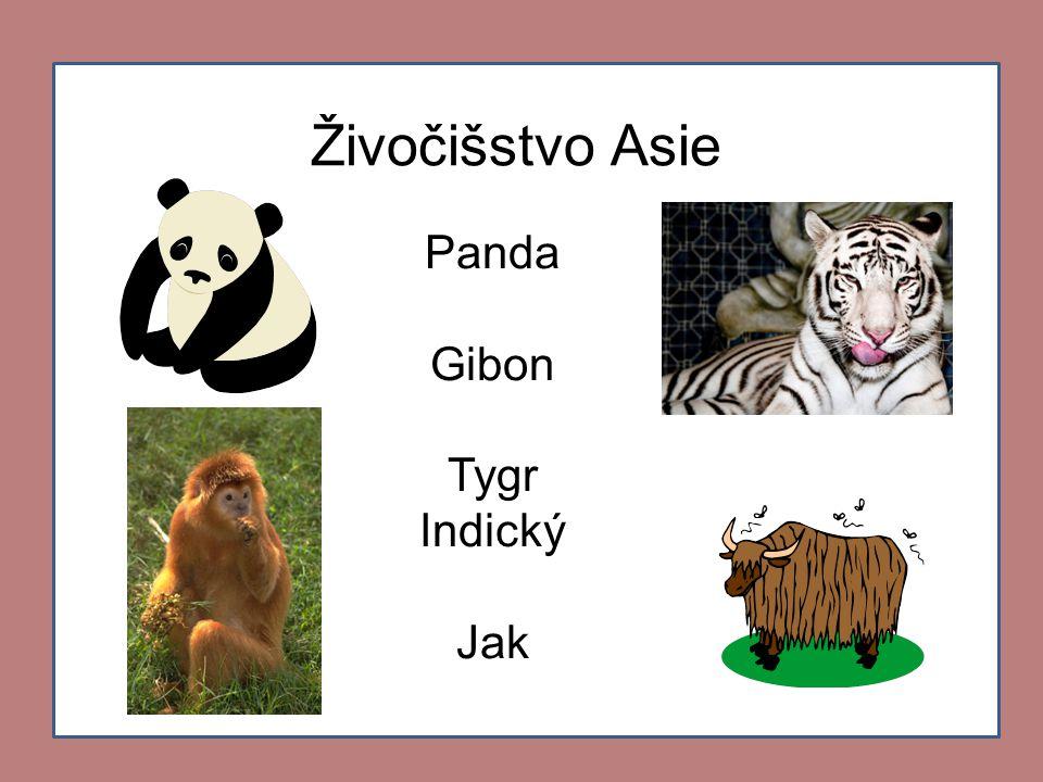 Živočišstvo Asie Panda Gibon Tygr Indický Jak