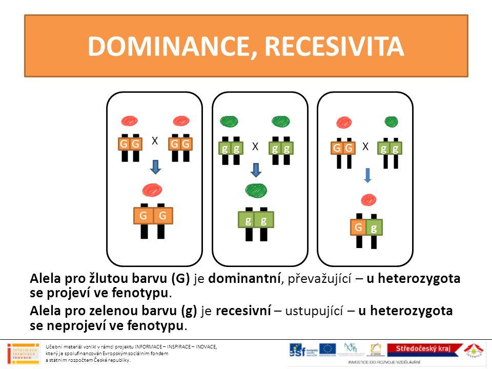 DOMINANCE, RECESIVITA X X GGGG GG gg gggg X G GGgg g Alela pro žlutou barvu (G) je dominantní, převažující – u heterozygota se projeví ve fenotypu. Al