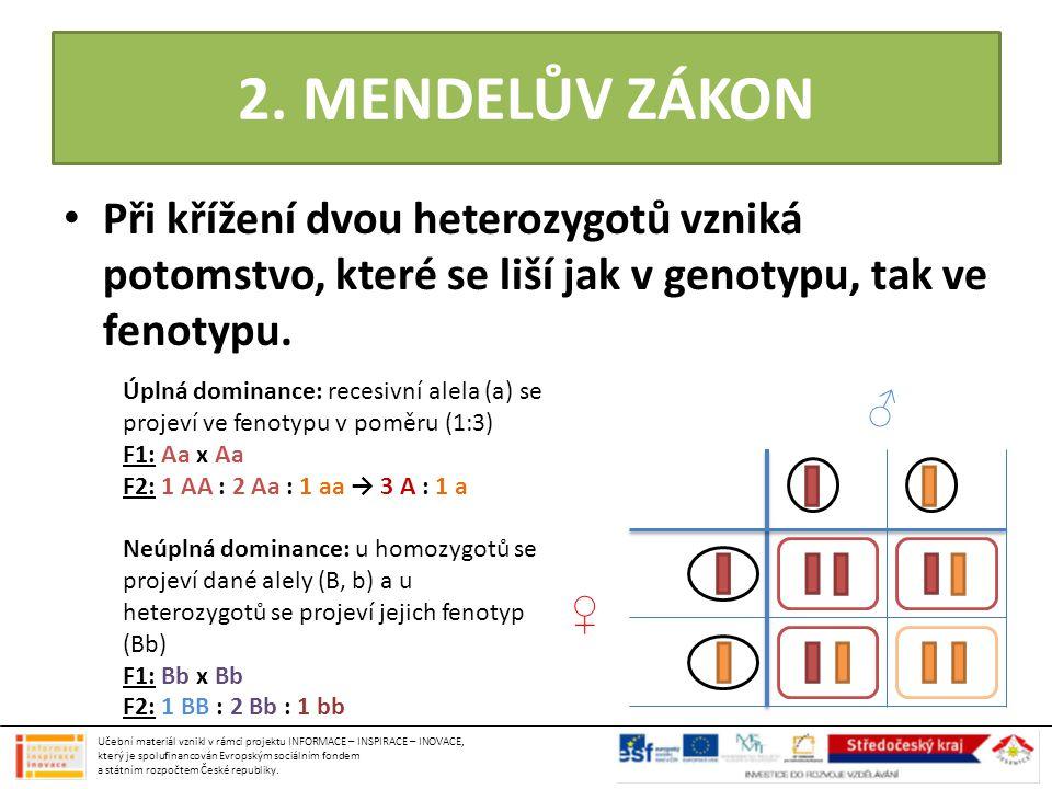 2. MENDELŮV ZÁKON • Při křížení dvou heterozygotů vzniká potomstvo, které se liší jak v genotypu, tak ve fenotypu. ♂ ♀ Úplná dominance: recesivní alel