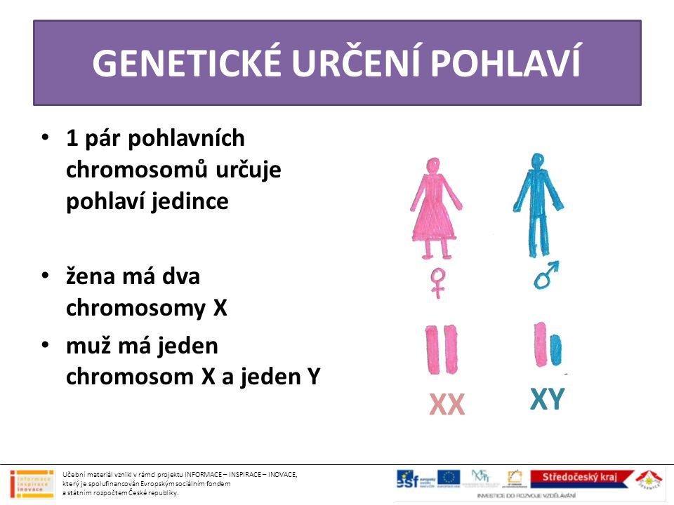 PŘENOS DNA DO POTOMKŮ • do pohlavních buněk se však dostává pouze jedna sada chromozomů (23) – tudíž pouze jeden pohlavní chromosom (obrázek) • splynutím vajíčka (22+X) a spermie (22+X, 22+Y) vzniká zárodek, který má již normální počet chromosomů (44+XX, 44+XY) = 46 ♂ ♀ X X XY POHLAVNÍ BUŇKY ZÁRODKY Učební materiál vznikl v rámci projektu INFORMACE – INSPIRACE – INOVACE, který je spolufinancován Evropským sociálním fondem a státním rozpočtem České republiky.