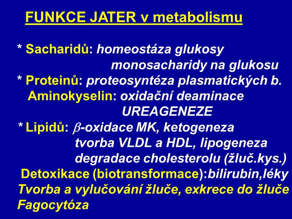 FUNKCE JATER v metabolismu * Sacharidů: homeostáza glukosy monosacharidy na glukosu * Proteinů: proteosyntéza plasmatických b.