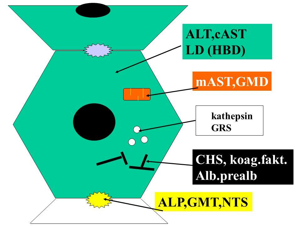 ALT,cAST LD (HBD) mAST,GMD kathepsin GRS CHS, koag.fakt. Alb.prealb ALP,GMT,NTS