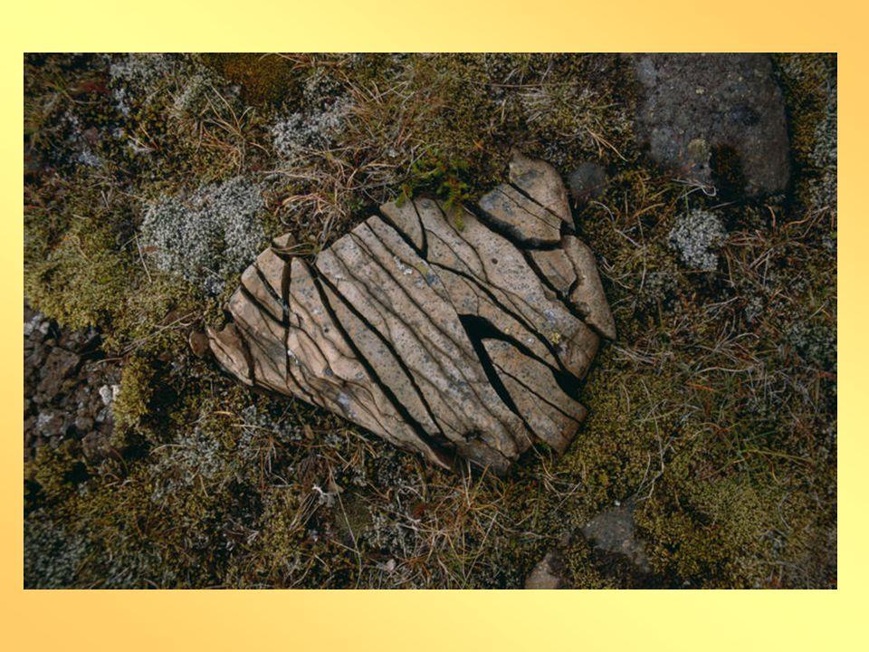INTENZITA ZVĚTRÁVÁNÍ •KLIMA – TEPLOTA A SRÁŽKY •VLASTNOSTI HORNIN – MINERÁLNÍ SLOŽENÍ •specifickým typem zvětrávání je selektivní (výběrové) zvětrávání, které je způsobeno různorodostí hornin nebo jejich částí.