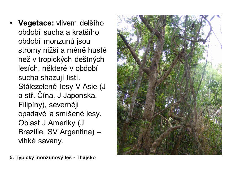 •Vegetace: vlivem delšího období sucha a kratšího období monzunů jsou stromy nižší a méně husté než v tropických deštných lesích, některé v období suc