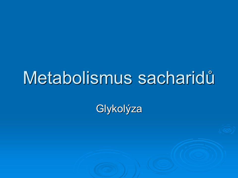 Metabolismus sacharidů Glykolýza