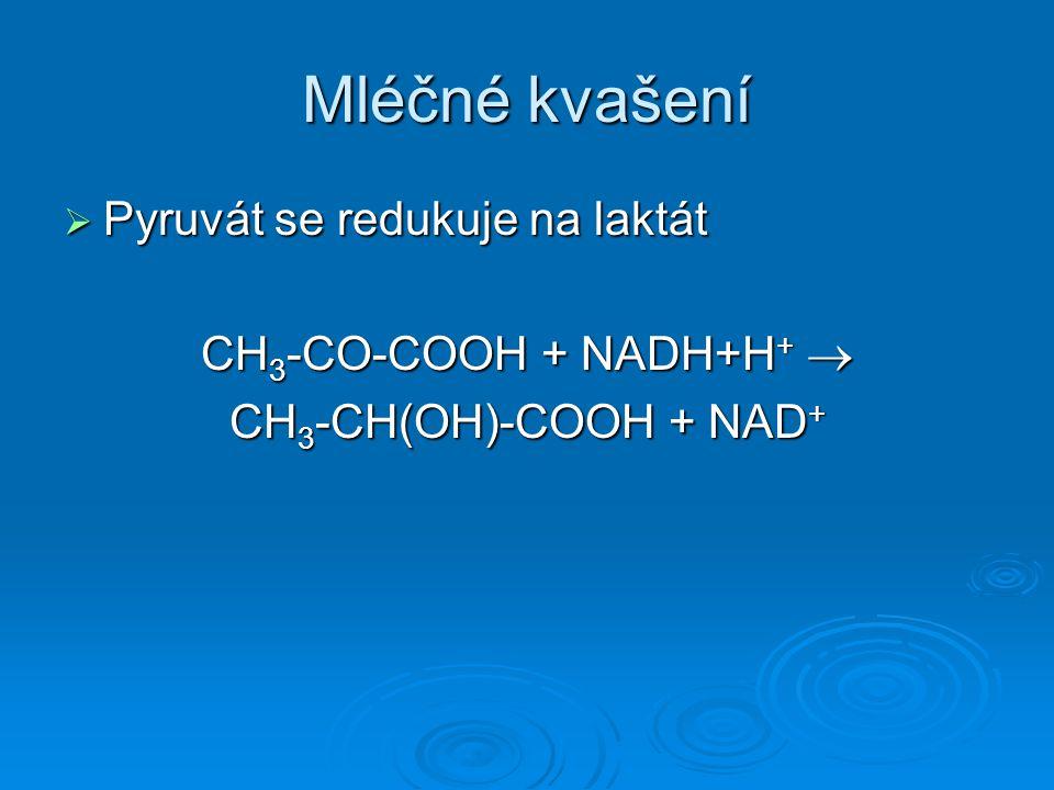 Mléčné kvašení  Pyruvát se redukuje na laktát CH 3 -CO-COOH + NADH+H +  CH 3 -CH(OH)-COOH + NAD +