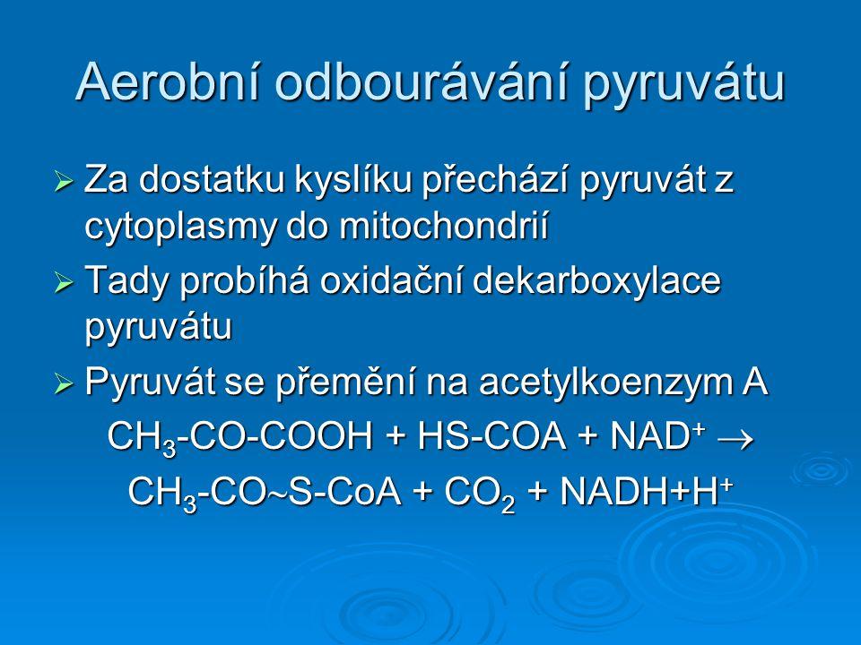 Aerobní odbourávání pyruvátu  Za dostatku kyslíku přechází pyruvát z cytoplasmy do mitochondrií  Tady probíhá oxidační dekarboxylace pyruvátu  Pyruvát se přemění na acetylkoenzym A CH 3 -CO-COOH + HS-COA + NAD +  CH 3 -CO  S-CoA + CO 2 + NADH+H +