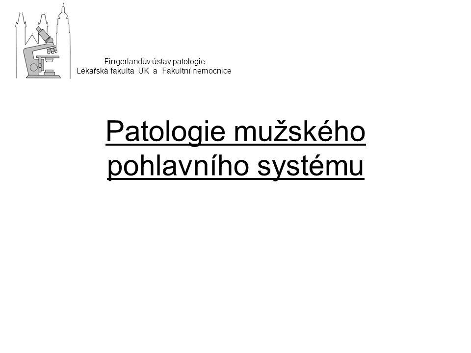 Patologie mužského pohlavního systému Fingerlandův ústav patologie Lékařská fakulta UK a Fakultní nemocnice