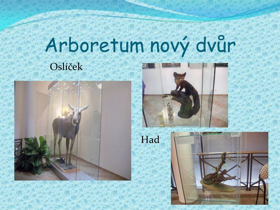Arboretum nový dvůr Oslíček Had