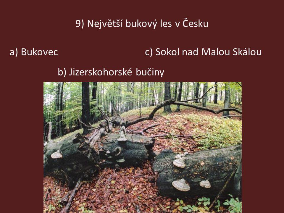 9) Největší bukový les v Česku b) Jizerskohorské bučiny c) Sokol nad Malou Skáloua) Bukovec