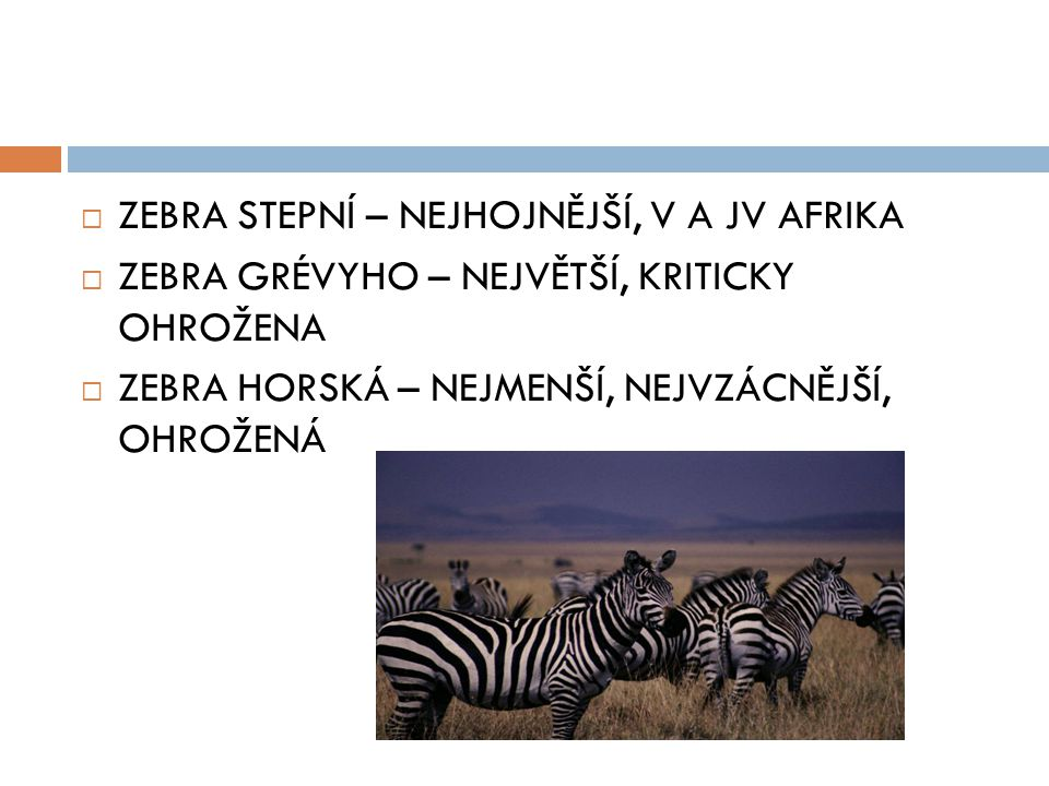  ZEBRA STEPNÍ – NEJHOJNĚJŠÍ, V A JV AFRIKA  ZEBRA GRÉVYHO – NEJVĚTŠÍ, KRITICKY OHROŽENA  ZEBRA HORSKÁ – NEJMENŠÍ, NEJVZÁCNĚJŠÍ, OHROŽENÁ