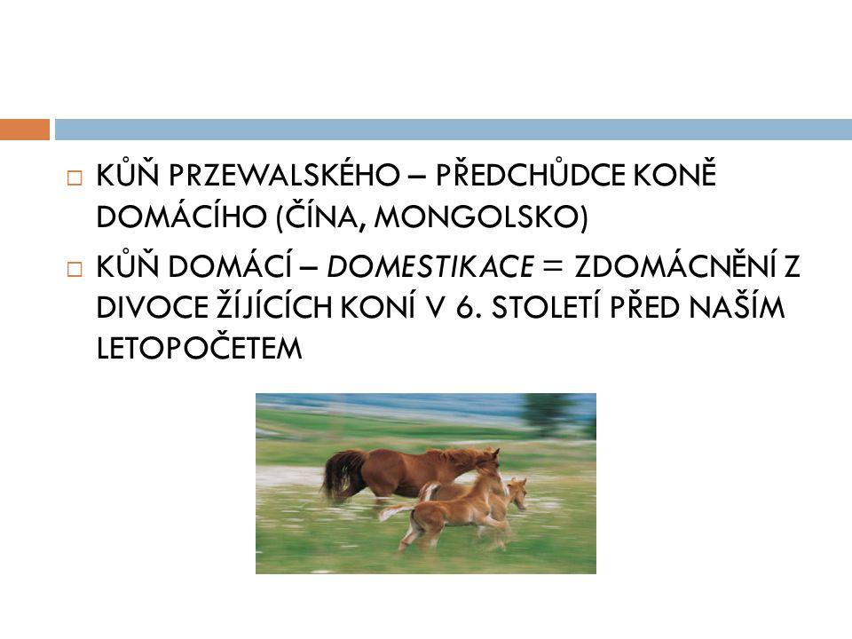  KŮŇ PRZEWALSKÉHO – PŘEDCHŮDCE KONĚ DOMÁCÍHO (ČÍNA, MONGOLSKO)  KŮŇ DOMÁCÍ – DOMESTIKACE = ZDOMÁCNĚNÍ Z DIVOCE ŽÍJÍCÍCH KONÍ V 6.
