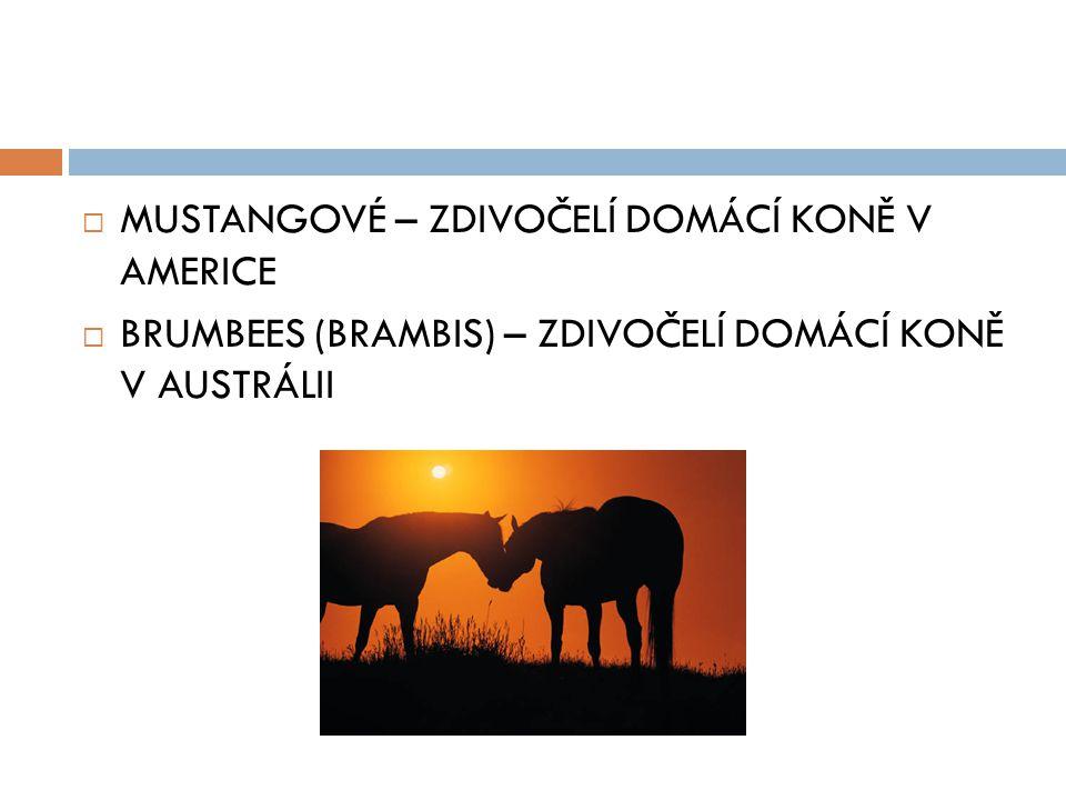  MUSTANGOVÉ – ZDIVOČELÍ DOMÁCÍ KONĚ V AMERICE  BRUMBEES (BRAMBIS) – ZDIVOČELÍ DOMÁCÍ KONĚ V AUSTRÁLII