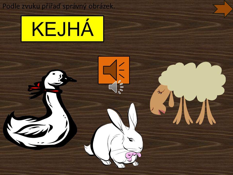 Co je na obrázku? Jak dělá ovce? BEČÍ