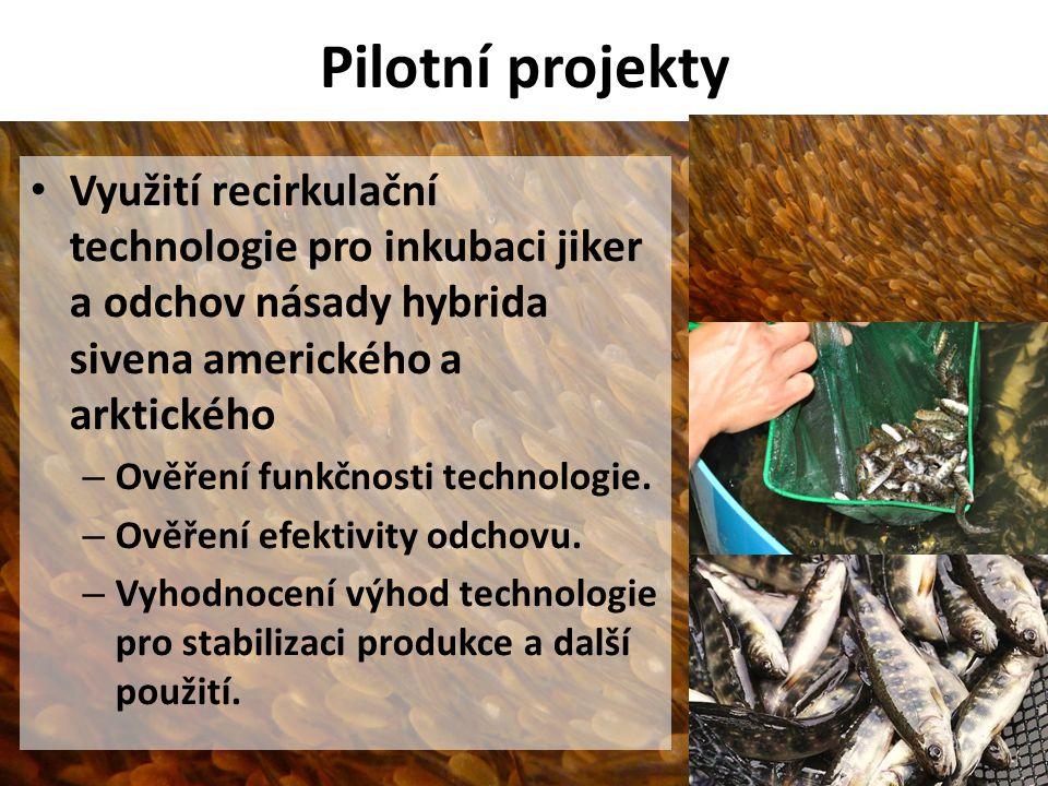 Pilotní projekty • Využití recirkulační technologie pro inkubaci jiker a odchov násady hybrida sivena amerického a arktického – Ověření funkčnosti tec