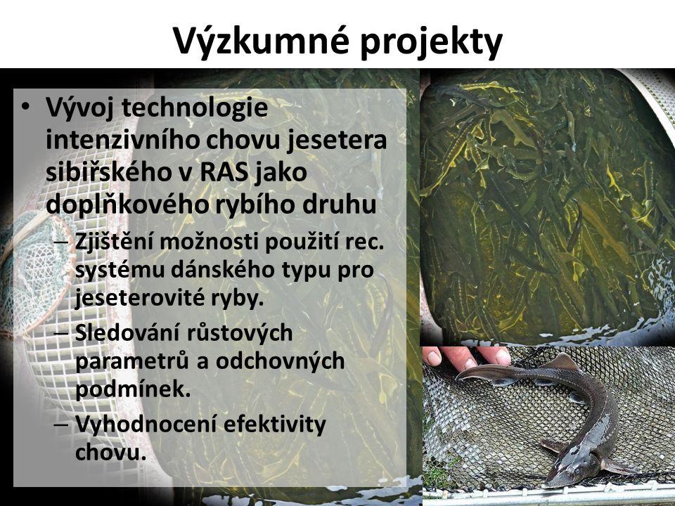 Výzkumné projekty • Vývoj technologie intenzivního chovu jesetera sibiřského v RAS jako doplňkového rybího druhu – Zjištění možnosti použití rec. syst