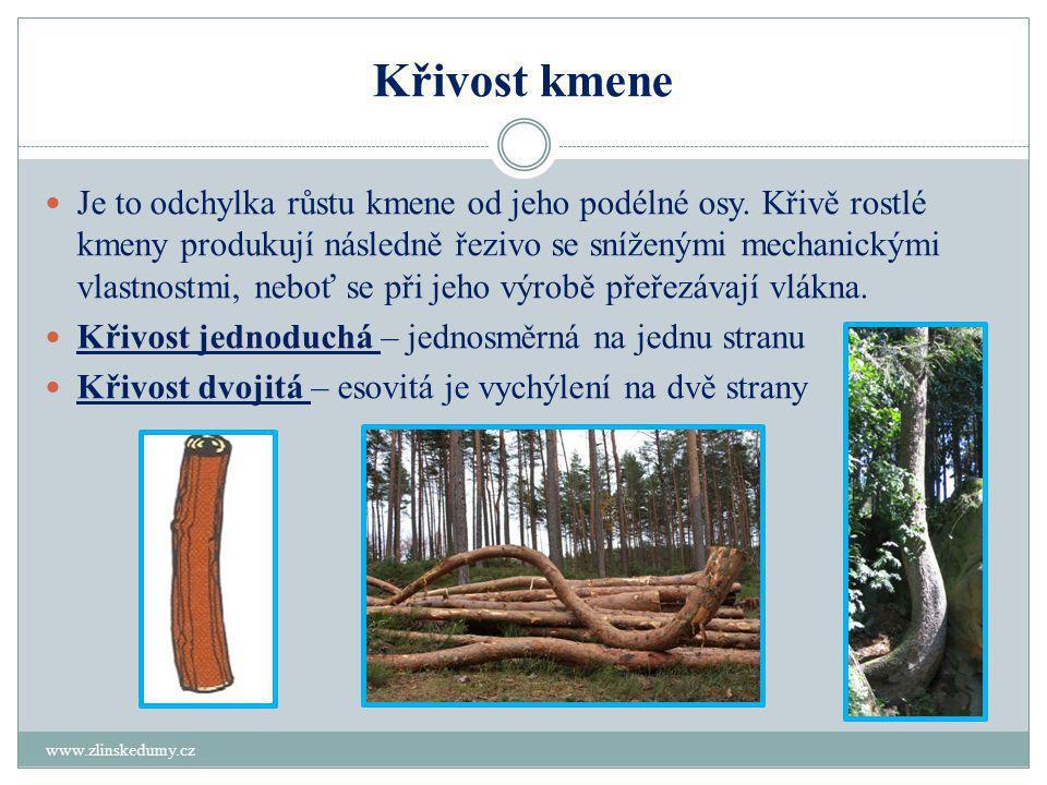 Křivost kmene www.zlinskedumy.cz  Je to odchylka růstu kmene od jeho podélné osy.