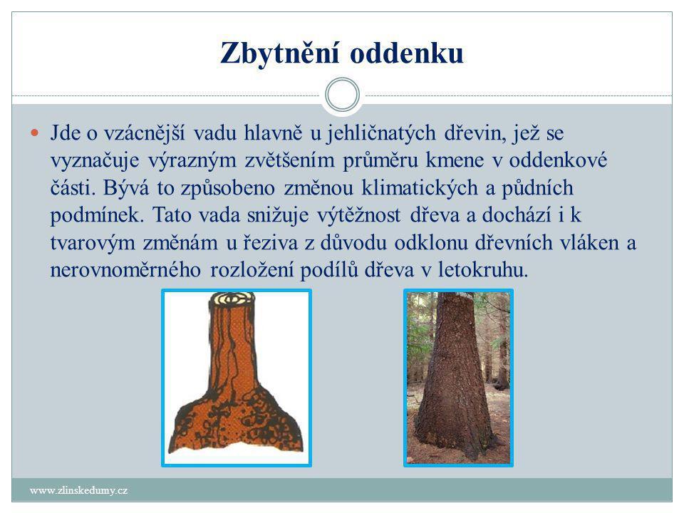 Zbytnění oddenku www.zlinskedumy.cz  Jde o vzácnější vadu hlavně u jehličnatých dřevin, jež se vyznačuje výrazným zvětšením průměru kmene v oddenkové části.