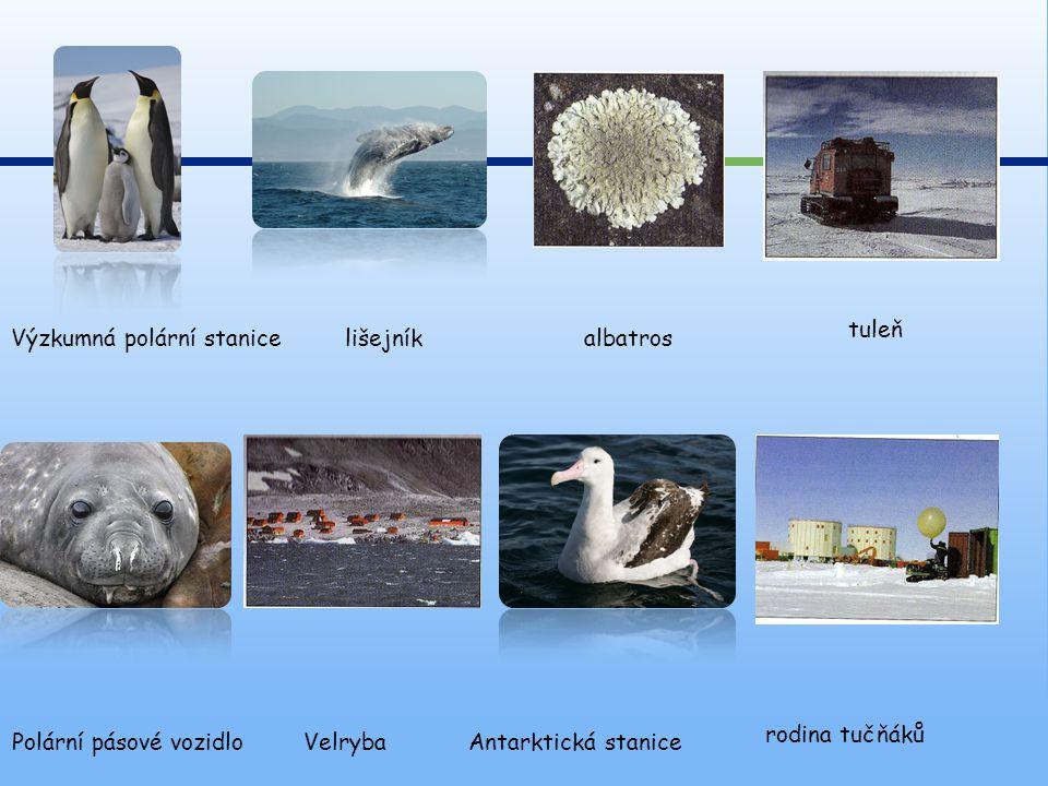 Polární pásové vozidlo Antarktická staniceVelryba rodina tučňáků lišejníkalbatros tuleň Výzkumná polární stanice