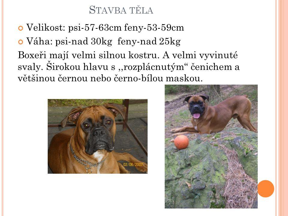 S TAVBA TĚLA Velikost: psi-57-63cm feny-53-59cm Váha: psi-nad 30kg feny-nad 25kg Boxeři mají velmi silnou kostru.