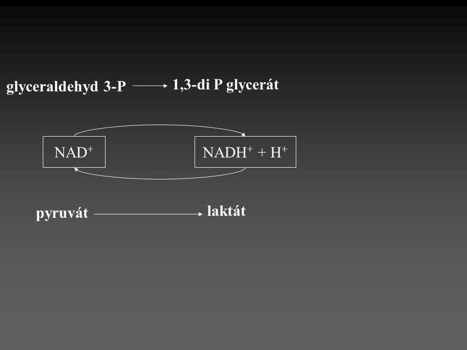 NADH + + H + NAD + 1,3-di P glycerát glyceraldehyd 3-P pyruvát laktát