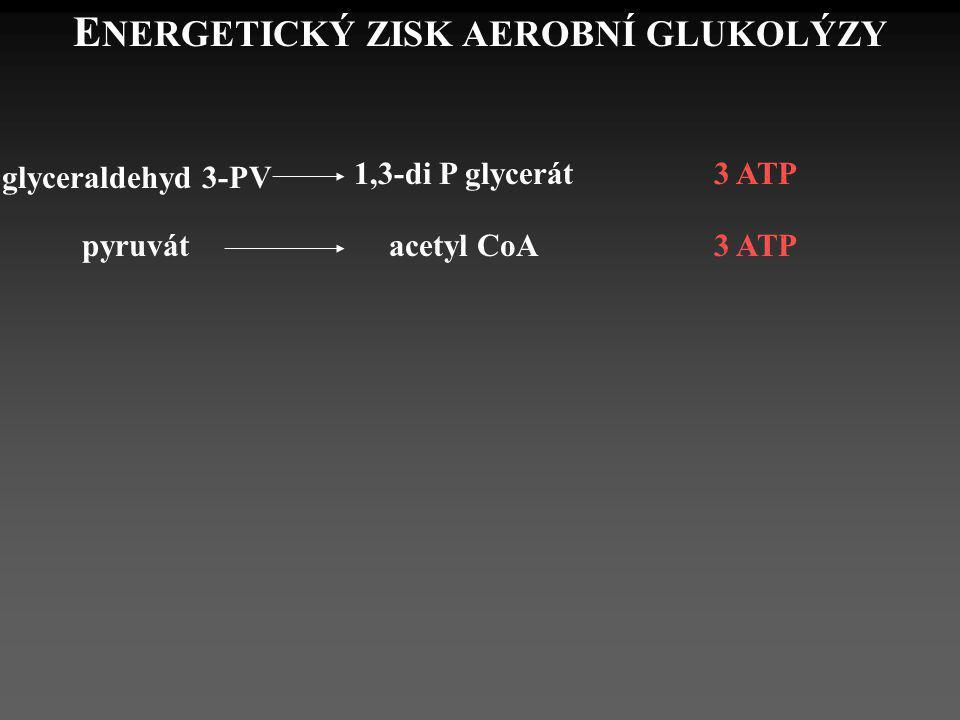 E NERGETICKÝ ZISK AEROBNÍ GLUKOLÝZY glyceraldehyd 3-PV 1,3-di P glycerát3 ATP pyruvátacetyl CoA 3 ATP