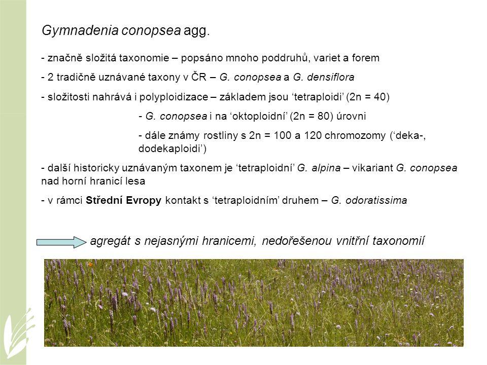 Gymnadenia conopsea agg. - značně složitá taxonomie – popsáno mnoho poddruhů, variet a forem - 2 tradičně uznávané taxony v ČR – G. conopsea a G. dens