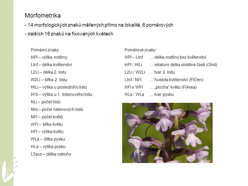 Morfometrika - 14 morfologických znaků měřených přímo na lokalitě, 6 poměrových - dalších 16 znaků na fixovaných květech Primární znaky: HPl – výška r