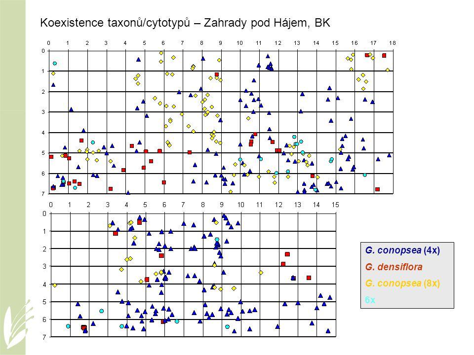 Koexistence taxonů/cytotypů – Zahrady pod Hájem, BK G. conopsea (4x) G. densiflora G. conopsea (8x) 6x