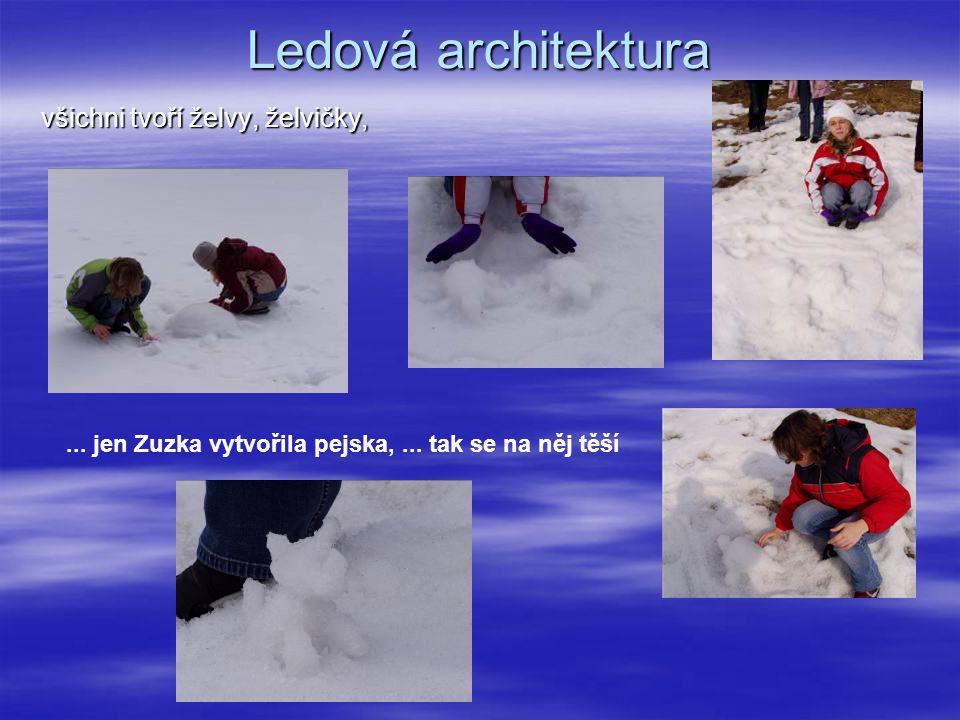 Ledová architektura všichni tvoří želvy, želvičky,...