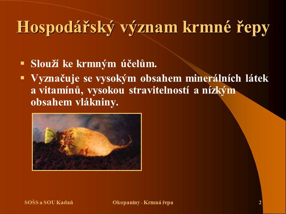 SOŠS a SOU KadaňOkopaniny - Krmná řepa2 Hospodářský význam krmné řepy  Slouží ke krmným účelům.