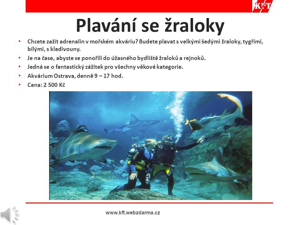 • Chcete zažít adrenalin v mořském akváriu.