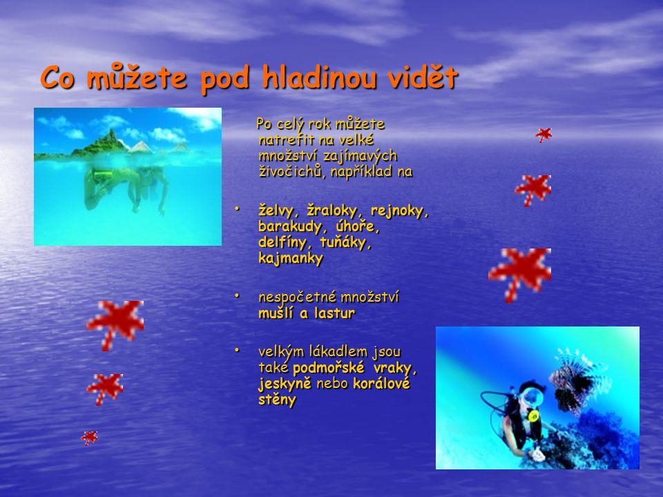 Co můžete pod hladinou vidět Po celý rok můžete natrefit na velké množství zajímavých živočichů, například na Po celý rok můžete natrefit na velké množství zajímavých živočichů, například na • želvy, žraloky, rejnoky, barakudy, úhoře, delfíny, tuňáky, kajmanky • nespočetné množství mušlí a lastur • velkým lákadlem jsou také podmořské vraky, jeskyně nebo korálové stěny