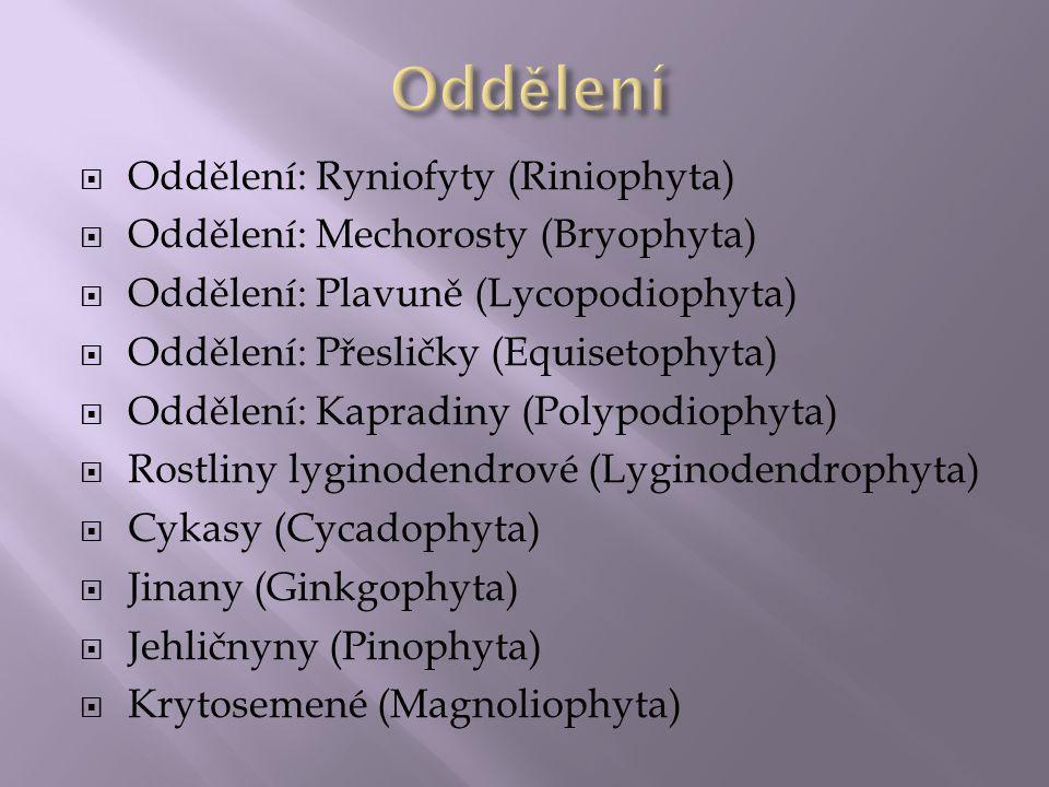 Jsou to převážně autotrofní(druhotně též heterotrofní) eukaryotické organismy, které se vyvíjely jako součást zelené větve rostlin.