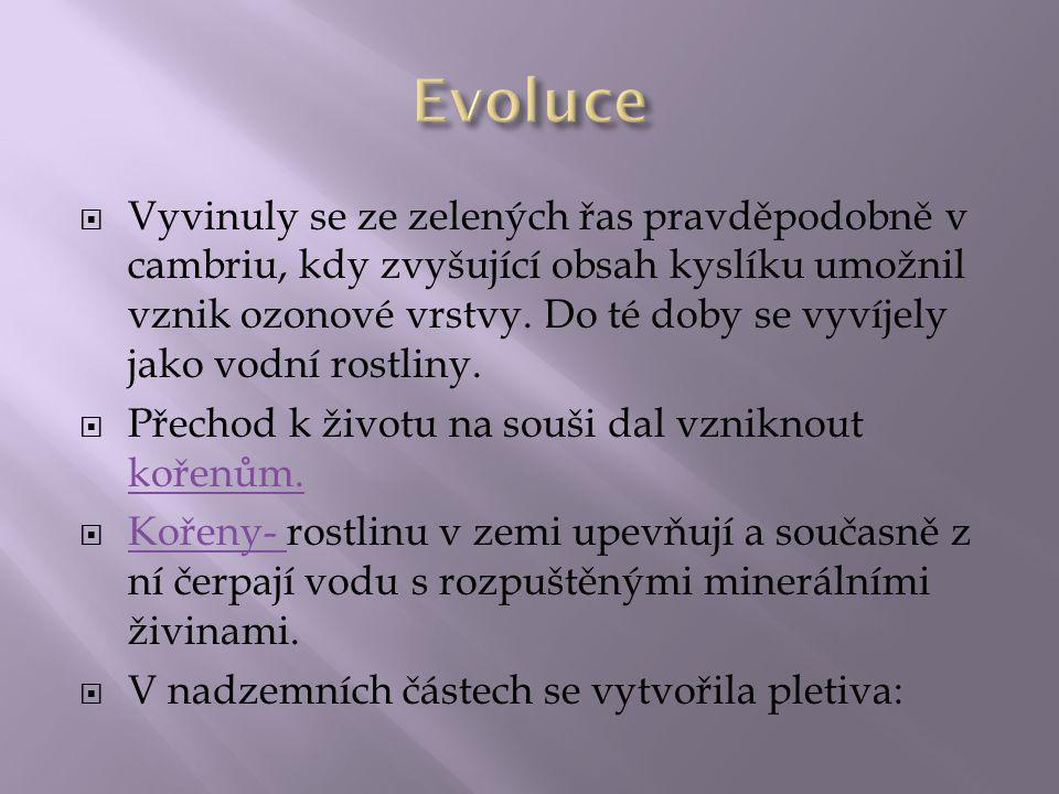  Našim nejběžnějším mechem je ploník (Polytrichum).
