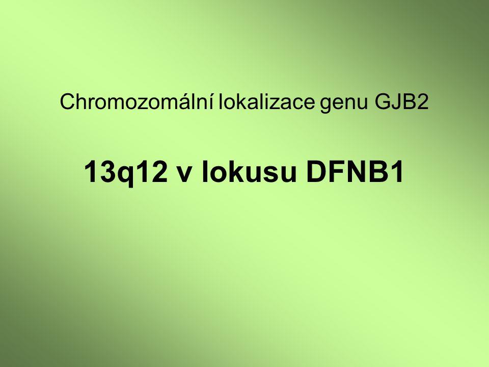 Chromozomální lokalizace genu GJB2 13q12 v lokusu DFNB1