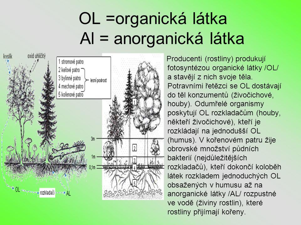 OL =organická látka Al = anorganická látka Producenti (rostliny) produkují fotosyntézou organické látky /OL/ a stavějí z nich svoje těla.