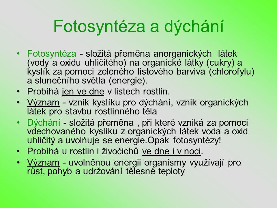 Fotosyntéza a dýchání •Fotosyntéza - složitá přeměna anorganických látek (vody a oxidu uhličitého) na organické látky (cukry) a kyslík za pomoci zeleného listového barviva (chlorofylu) a slunečního světla (energie).