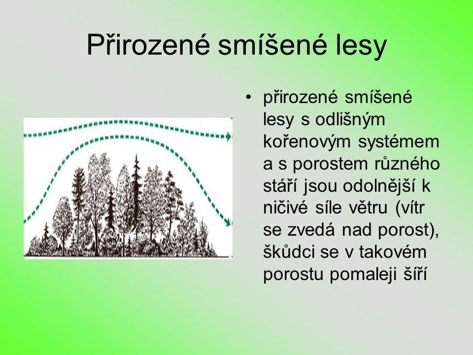 Přirozené smíšené lesy •přirozené smíšené lesy s odlišným kořenovým systémem a s porostem různého stáří jsou odolnější k ničivé síle větru (vítr se zvedá nad porost), škůdci se v takovém porostu pomaleji šíří
