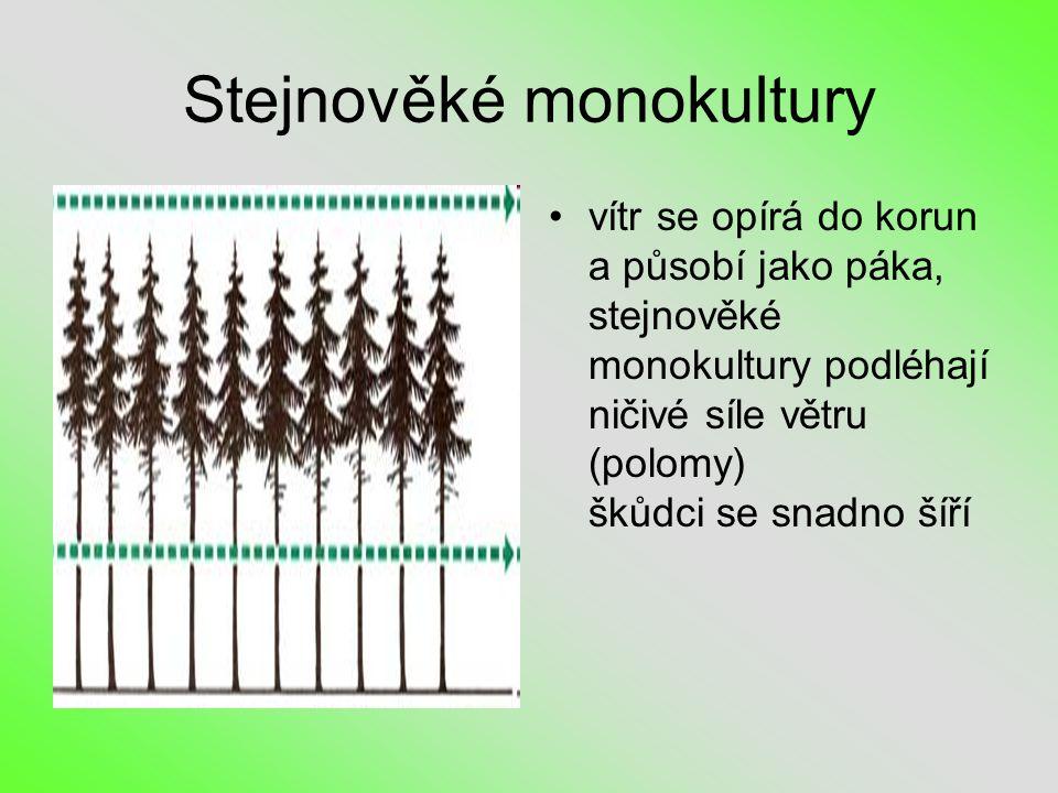 Stejnověké monokultury •vítr se opírá do korun a působí jako páka, stejnověké monokultury podléhají ničivé síle větru (polomy) škůdci se snadno šíří